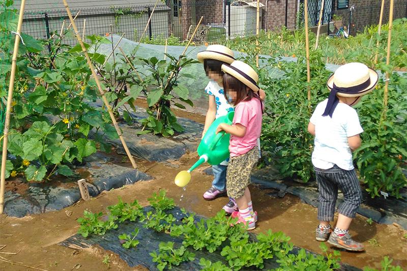 ひびきのもり菜園